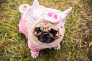 Selbstmotivation – so zähmen Sie den inneren Schweinehund