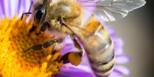 Unsere Bienenpatenschaft